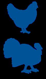 chicken and turkey stacked_MW blue